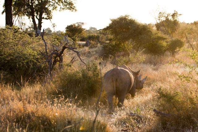 Black Rhino release_Kai Collins-1574